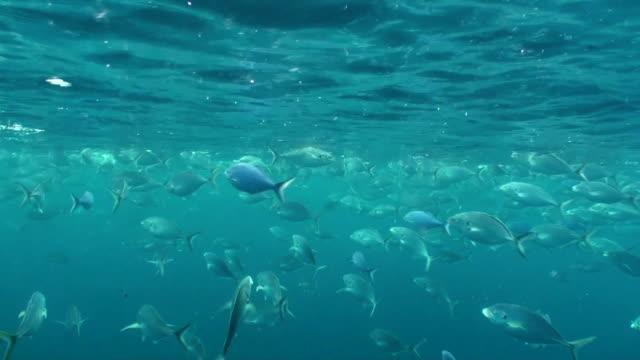 fish feeding underwater video