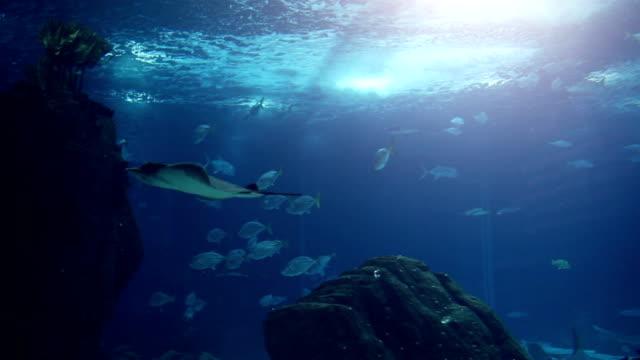Fish in a big blue aquarium video