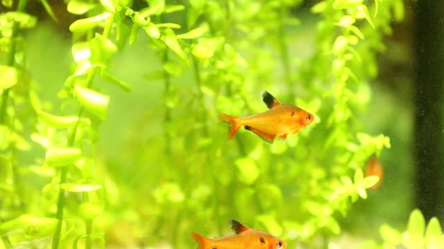 fish in an aquarium video