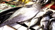 Fish in Asian market video