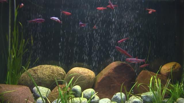 fish in large aquarium video
