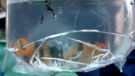 Fish in the plastic bag video