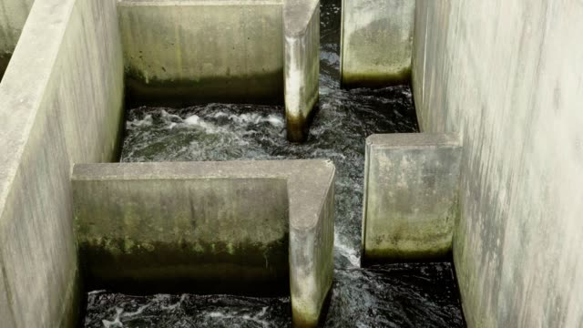 Fish ladder on the lehigh river 2 video