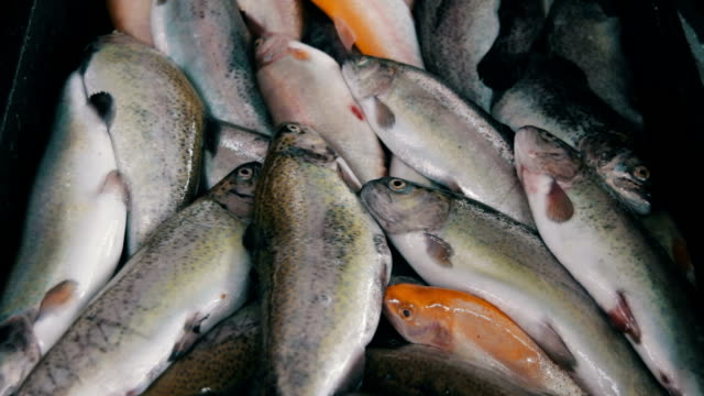 Fish Market video