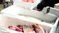 Fish on Market Stalls video