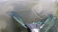 Fish out of the water using landing net. Pov shot. video