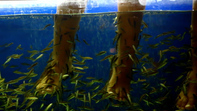 fish pedicure spa treatment video