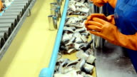 Fish Process In Factory video