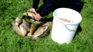 fish put bucket video