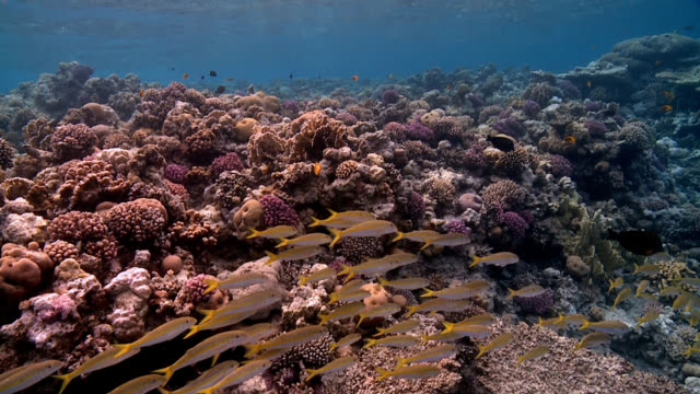 fish shoal on coral reef video