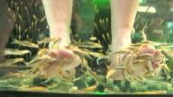 Fish Spa Pedicure by Garra Rufa, Thailand video