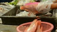 Fish spliting video