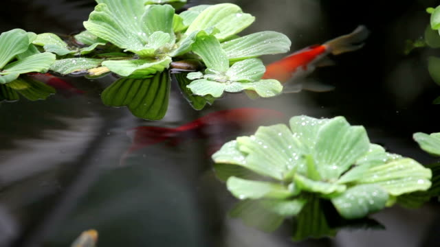 Fish swim among plants video