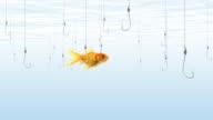Fish swims near fishing hooks video