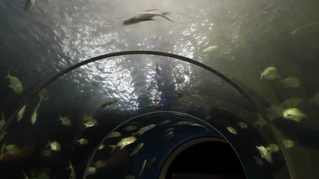 Fish tunnel in aquarium. video