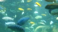 Fish under water in 4K video