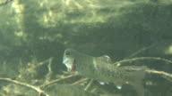 Fish Underwater video