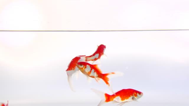 Fish (HD 1080) video