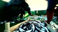 Fisherman Boat video