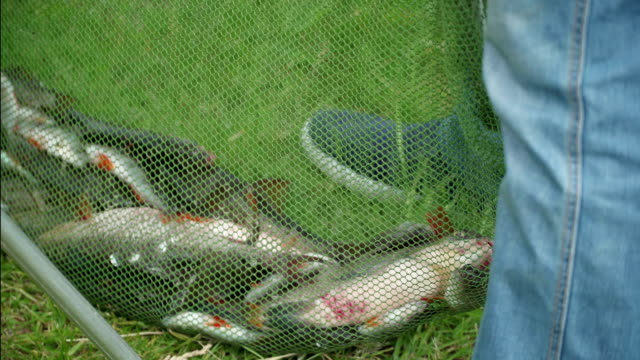Fisherman caught wild fish on the river in the city. Catch fisherman in competitions. Big fish. Sport feeder fishing competitions. Concept successful catch excitement and joy. Caught and released video