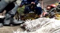 Fisherman clean fishing net video