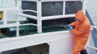 Fisherman Opens Trawl Net with Caugth Fish on Board of Commercial Fishing Ship video
