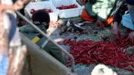 Fishermen sorting prawns video