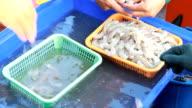 fishermen were selected shrimps. video