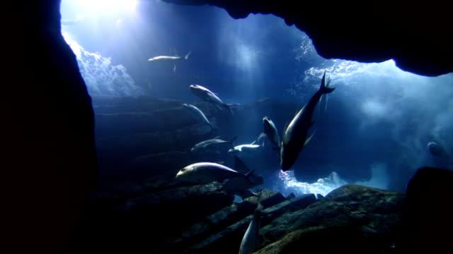 Fishes in big aquarium video