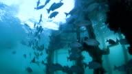 Fishes schooling around underwater photographer video