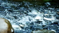 Fishes Swimming Up River Stream video