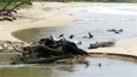 fishing birds relax on dead pine tree video