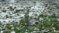 Fishing heron 4 - HD 1080/60i video