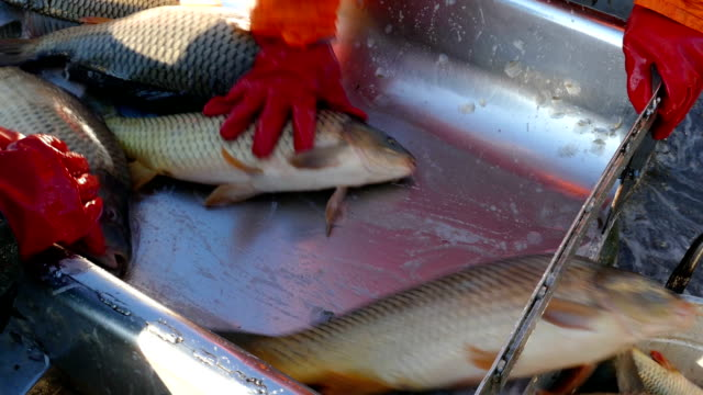 Fishing Industry video