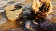 Fishing net full of fish video