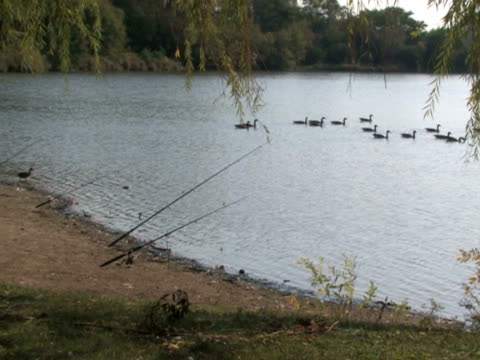 Fishing Poles and Geese video