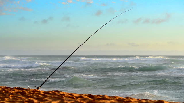 Fishing rods set up on beach shore at sunset video
