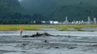 Fishing salmon tidal river Valdez P HD video