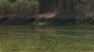 HD: Fishing video