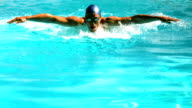 Fit swimmer doing the butterfly stroke in the swimming pool video