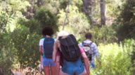 Five friends walking on a forest trail, back view video