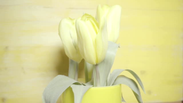 Five yellow tulips in a vase on a yellow background video