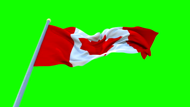Flag of CANADA Waving On Green Screen , Seamless Loop Animation. video