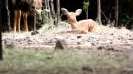 Nyala video