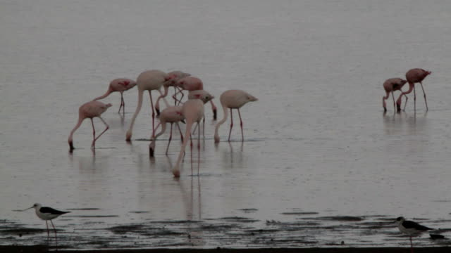 flamingo lake on a cloudy day video