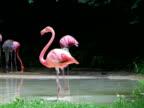 Flamingo Spinning Backwards video