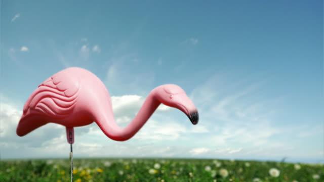 Flamingo Timelapse video