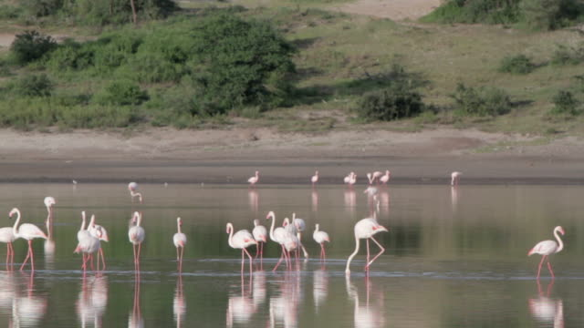 flamingoes lake on a sunny day video