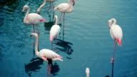 Flamingos Flock In The Lake video