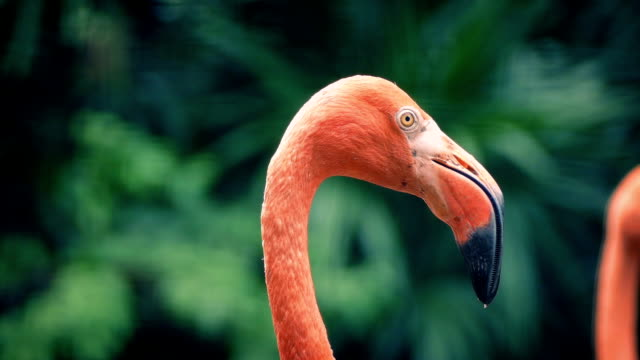 Flamingos In Tropical Landscape video